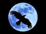 Crow Moon Equinox Ski Tour at Auburn Ski Club Training Center